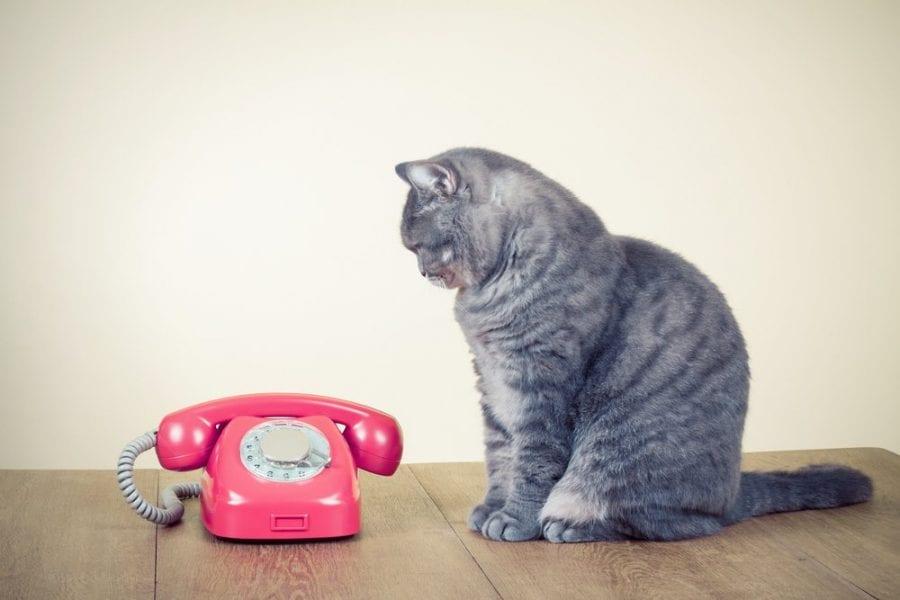 Téléphone Eni