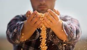 vente semences paysannes particuliers